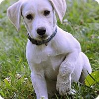 Adopt A Pet :: Sloane - Pleasant Plain, OH