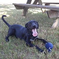 Adopt A Pet :: Raisin - Jefferson, TX