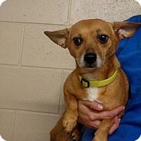 Adopt A Pet :: Bryant - Oviedo, FL