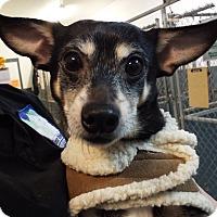 Adopt A Pet :: Doodles - Grants Pass, OR