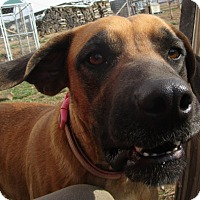 Adopt A Pet :: Kate - Melbourne, AR