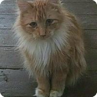 Adopt A Pet :: C30 Litter-Romeo - Livonia, MI