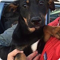 Adopt A Pet :: Brianne - Dana Point, CA