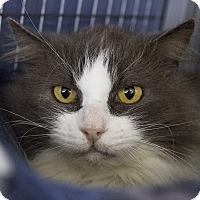 Adopt A Pet :: Smokey - Winchendon, MA