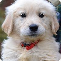 Adopt A Pet :: Sam - Enfield, CT