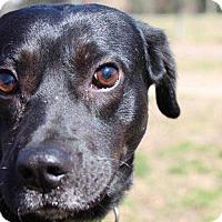 Adopt A Pet :: Stage - Virginia Beach, VA