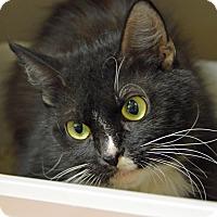 Adopt A Pet :: 10310348 - Brooksville, FL