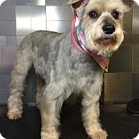 Adopt A Pet :: Maeve - McKinney, TX