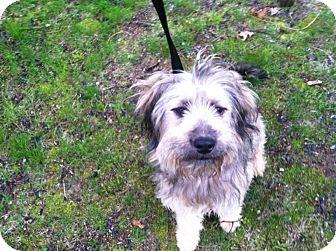 Terrier (Unknown Type, Medium) Mix Dog for adoption in Shirley, New York - Winn Dixie