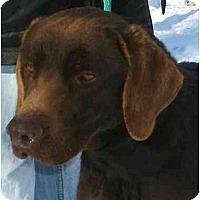 Adopt A Pet :: HunterPENDING - Toronto/Etobicoke/GTA, ON