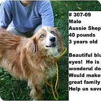 Adopt A Pet :: # 307-09 - RESCUED! - Zanesville, OH