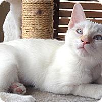 Adopt A Pet :: Dutchess - Beverly Hills, CA