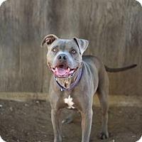 Adopt A Pet :: Hurley - Costa Mesa, CA