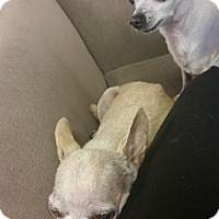 Adopt A Pet :: Boris and Natasha - Marietta, GA