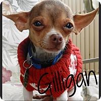 Adopt A Pet :: Gilligan - Orange, CA