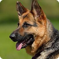 Adopt A Pet :: Ginny - Dacula, GA