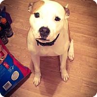 Adopt A Pet :: Jax - Greeley, CO