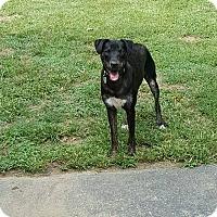 Adopt A Pet :: Nahla - Blue Bell, PA