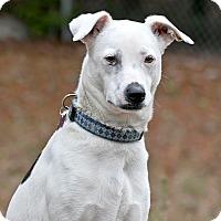 Adopt A Pet :: Maylie - Cashiers, NC