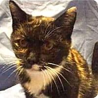 Adopt A Pet :: Gwen - LaJolla, CA