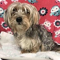 Adopt A Pet :: YANA - Upper Marlboro, MD