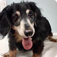 Adopt A Pet :: Sir Buddy - Weston, FL