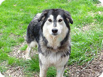 Husky Dog for adoption in Salem, Oregon - Star