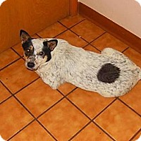 Adopt A Pet :: Megs - Lancaster, OH
