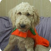 Adopt A Pet :: Larry ADOPTION PENDING!! - Antioch, IL