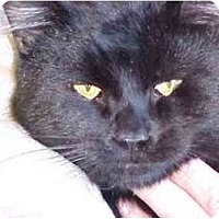 Adopt A Pet :: Blackie - Quincy, MA
