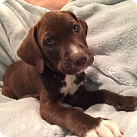 Adopt A Pet :: Luther - Lewisville, IN