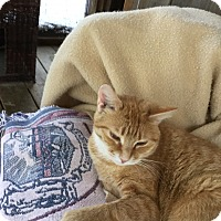Adopt A Pet :: Joyce - Sanford, ME