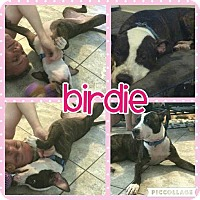 Adopt A Pet :: Birdie - Scottsdale, AZ