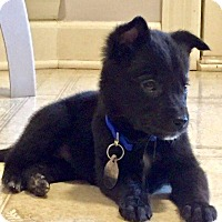 Adopt A Pet :: Roxie - Marietta, GA