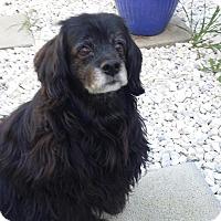 Adopt A Pet :: Skippy - Santa Barbara, CA
