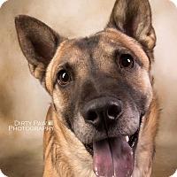 Adopt A Pet :: Costello (COURTESY POST) - Baltimore, MD