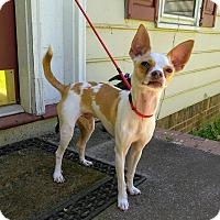 Adopt A Pet :: Coda - Lawrenceville, GA
