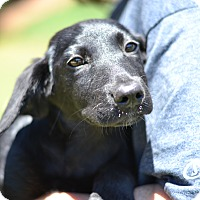 Adopt A Pet :: Jockey - Derby Litter - Acworth, GA