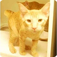 Adopt A Pet :: George - Maywood, NJ
