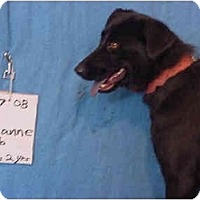 Adopt A Pet :: Leanne/Rescued! - Zanesville, OH