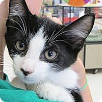 Adopt A Pet :: Tipper - Riverhead, NY
