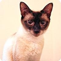 Adopt A Pet :: Piper - Vancouver, BC