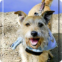 Adopt A Pet :: Jake fun family dog - Sacramento, CA