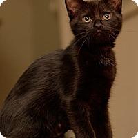 Adopt A Pet :: Joy - North Highlands, CA