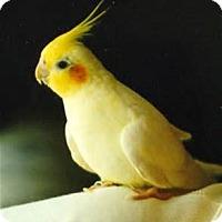 Adopt A Pet :: Bizit - Independence, KY