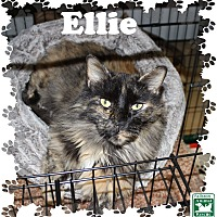 Adopt A Pet :: Ellie - Fallston, MD