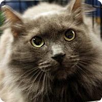 Adopt A Pet :: Smudge - Madisonville, LA