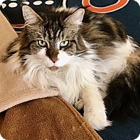 Adopt A Pet :: Bella & Gabriella - Orland Park, IL