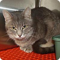 Adopt A Pet :: Addie - Somerset, KY