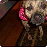 Adopt A Pet :: Lucinda Star - Eden, NC
